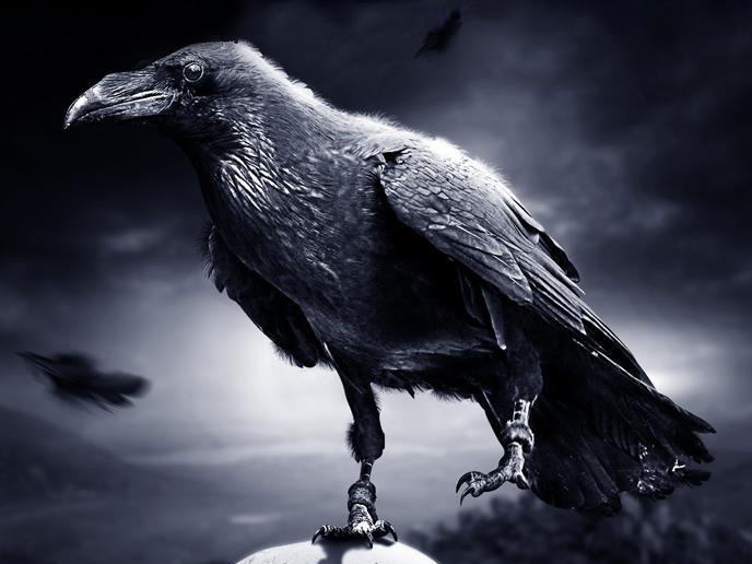 raven-01_cr